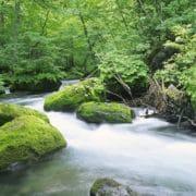 environmental philosophy