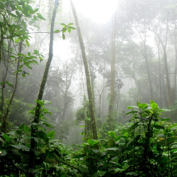 tall trees in rainforest