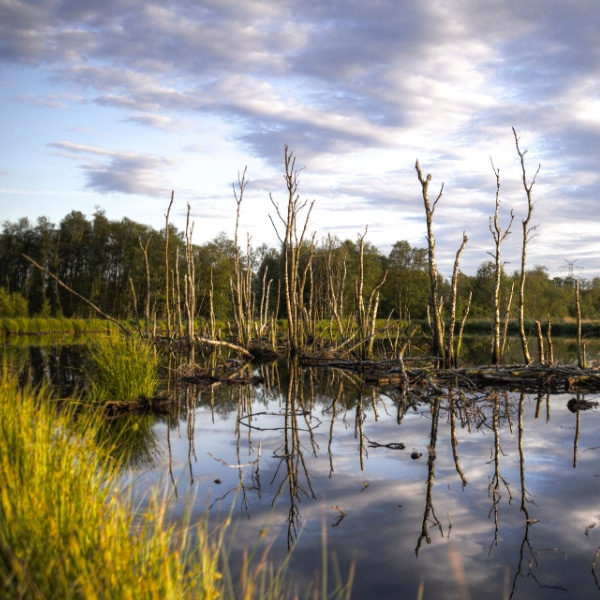 trees in bog wetlands